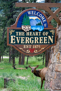Elk by Welcome to Evergreen sign.