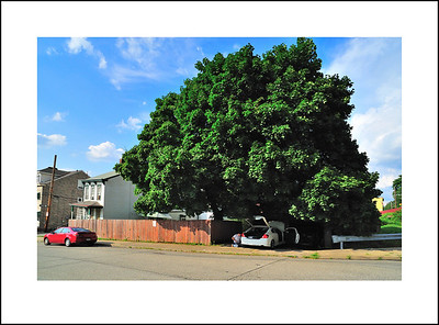 I love Kento's big tree.  He was busy fixing Cindy's brakes on her car.