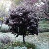 Snow15 10-29-11