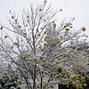 Snow2 10-29-11