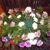 Gely_flowers-2 12-15-11