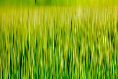 Grass impressions 1