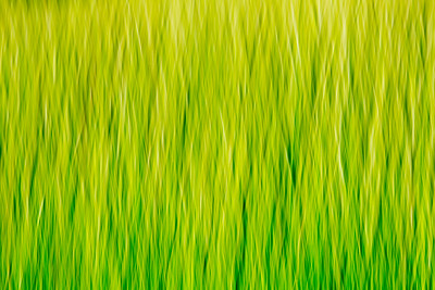 Grass impressions 2
