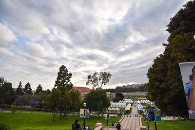 The Campus   UCLA