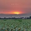 Sunset with smoke