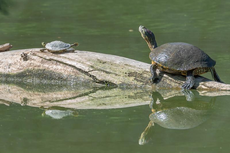 Super Turtle!
