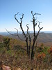 STARK CONTRAST IN AUTUMN<br /> These two lifeless trees still stand watch over the majestic Appalachian Mountain Range in North Carolina!