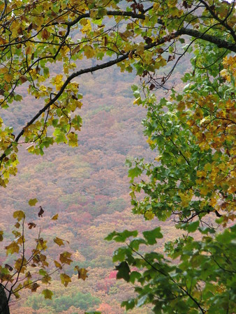AUTUMN'S WINDOW<br /> Peering through the trees to the mountains beyond, we see a mountainside canvas of spectacular color!  The Blue Ridge Mountains are ablaze in color!
