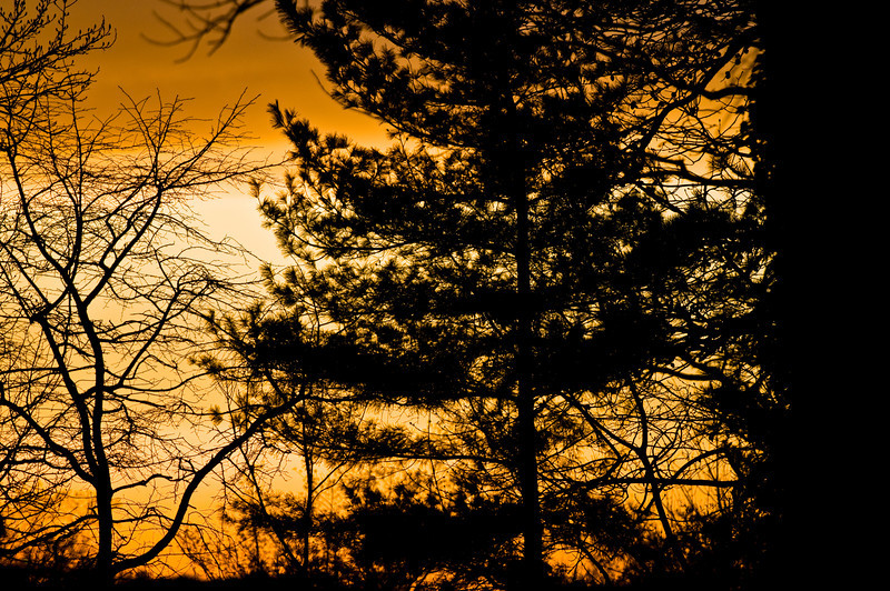 Title: Designs in the Branches<br /> Date: March 2010<br /> Orange sunset through some trees.