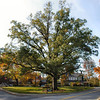 Title: Bellamy Park<br /> Date: November 2007
