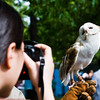 Title: My Close Up<br /> Date: May 2008<br /> A rescued Barn Owl posing for pictures during Cheverly Day.