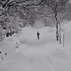 Title: Runner<br /> Date: February 2010<br /> A Cheverly Resident runs along Crest Ave during the first of the Double Snow Storms of February 2010. The two snowstorms together are generally referred to as Snowmageddon.