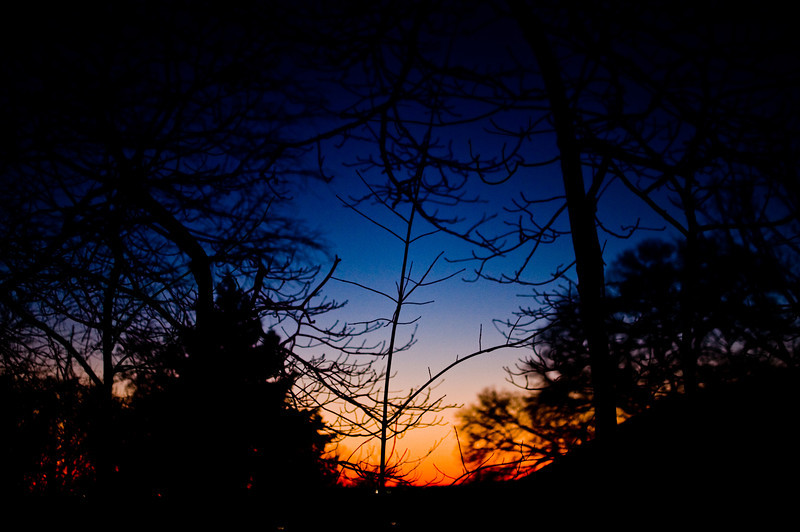 Title: Through the Trees<br /> Date: December 2009<br /> Sunset through the trees.