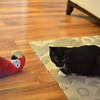 Raven's commandeered Donovan's birdie