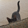 stalking cat....someone cue the Jaws music.
