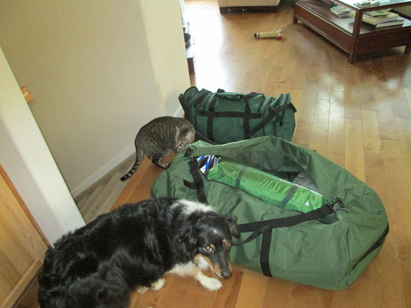 Indi and Moby help me pack for the trip