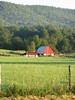 THE FARMER IN THE DELL<br /> This quaint farm is tucked in a lush green valley at the edge of the scenic Blue Ridge Mountains!