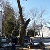 tree_cutting13 1-9-10