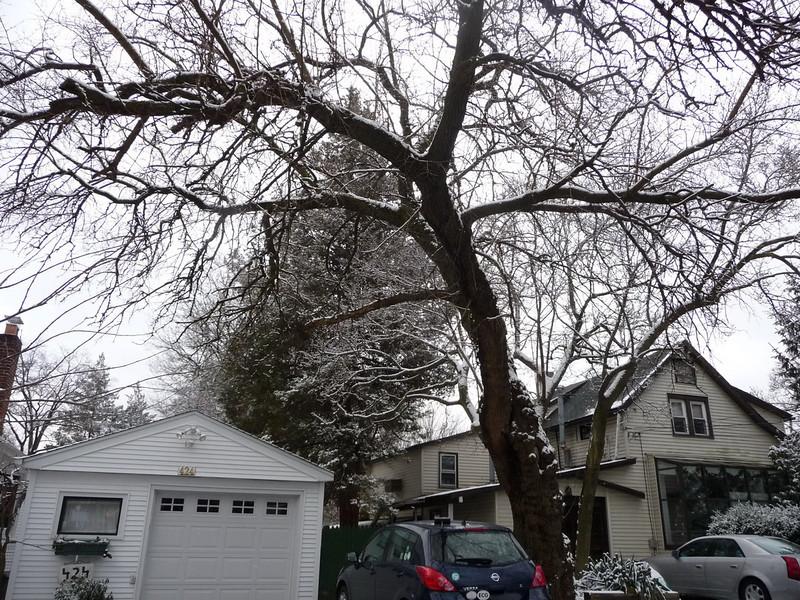 tree_cutting01 1-9-10