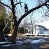 tree_cutting05 1-9-10