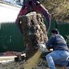 tree_cutting30 1-9-10