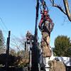 tree_cutting27 1-9-10