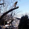 tree_cutting11 1-9-10