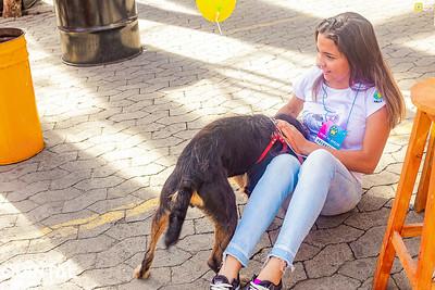 Adoção de Pets - 30.06.2019