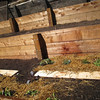 Picture taken September 22, 2012.In front of the planks: cabbage; in front of the cabbage, beets. Behind the planks, from left: artichoke on the left, thyme, parsley. The hay is mulch.