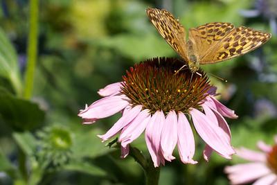 Garden_2011-08