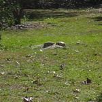 Gopher Turtles making whoopie