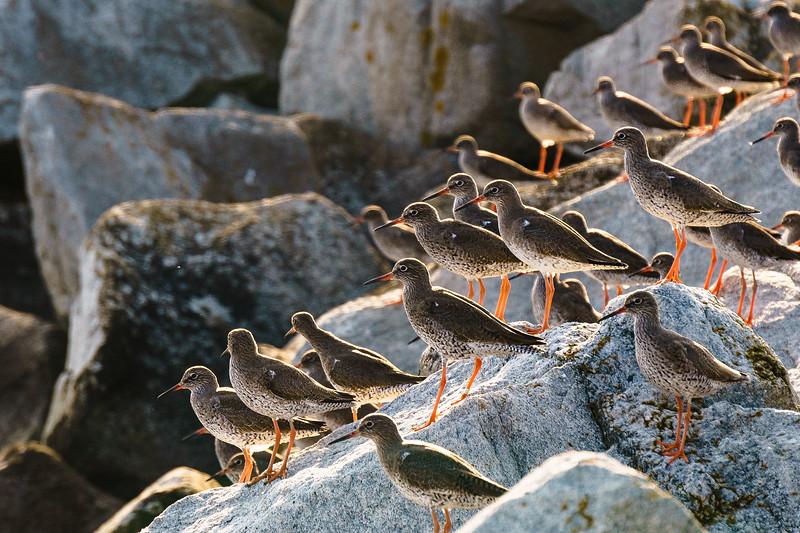 Birds at Rest - Herne Bay