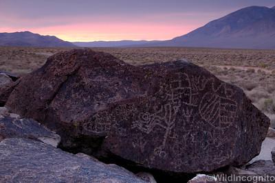 Petroglyphs Owen Valley