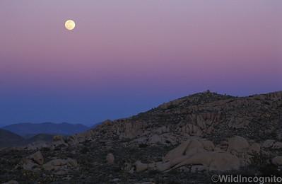 Full Moonrise and Earth Shadow Joshua Tree National Park