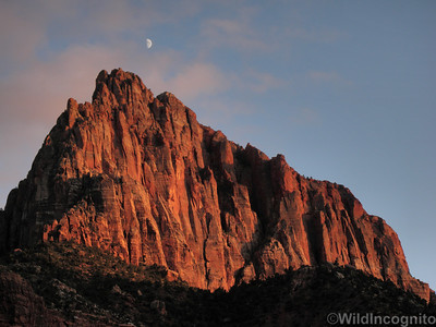 The Watchman and Moon Zion National Park