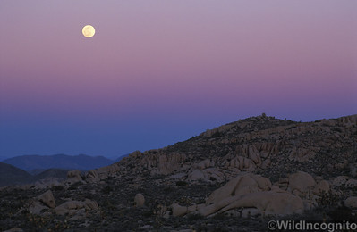 Full Moonrise and Earth Shadow Joshua Tree National Park