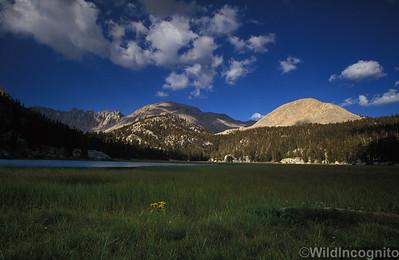 Rock Creek Sequoia/ Kings