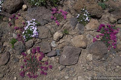 Alpenflowers