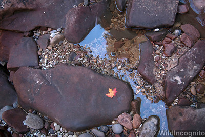 Zion Subway Autumn Leaf