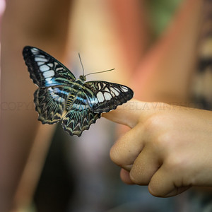 Brand new butterfly and Child