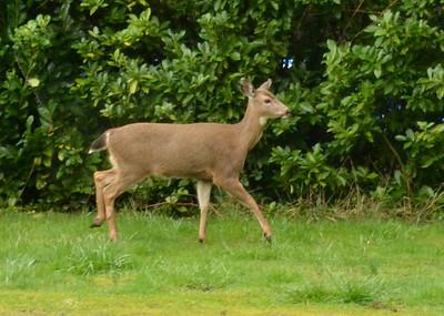 Oh, Deer -- Mar 2012