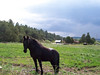 This is the sneaky horse that always ends up on our land. Right now he is in his own pasture as a thunderstom approaches from the west. He is waiting from Chris to bring him treats as he usually does most afternoons.