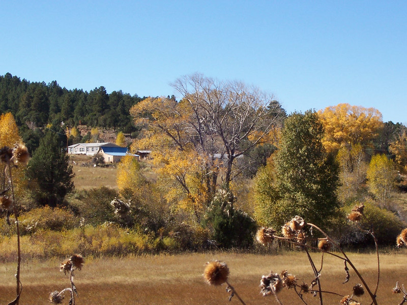 Close-up photo taken from Highway 75. The blue roof in the distance is the adobe. The other house behind it is the neighbor. The mobile home is not visible because of the trees.