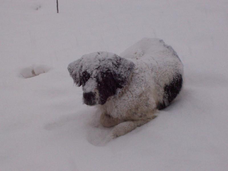 Jester enjoying a snowy Saturday afternoon.