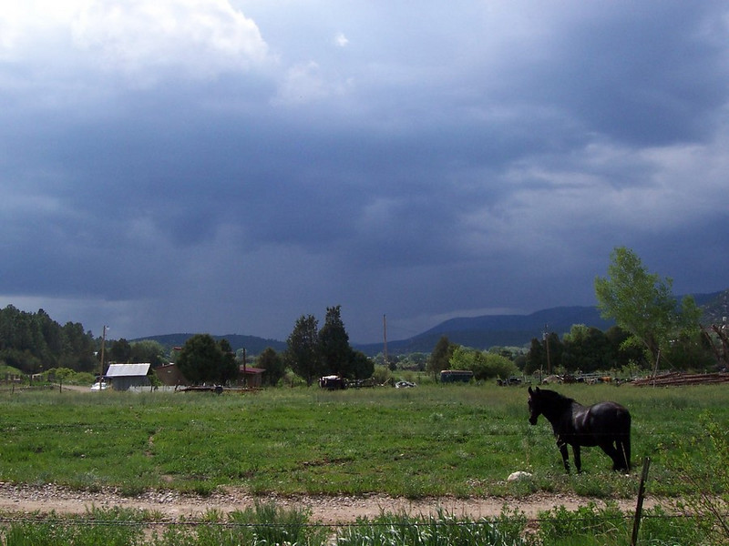 This is the sneaky horse that always ends up on our land. Right now he is in his own pasture as a thunderstom approaches from the west.