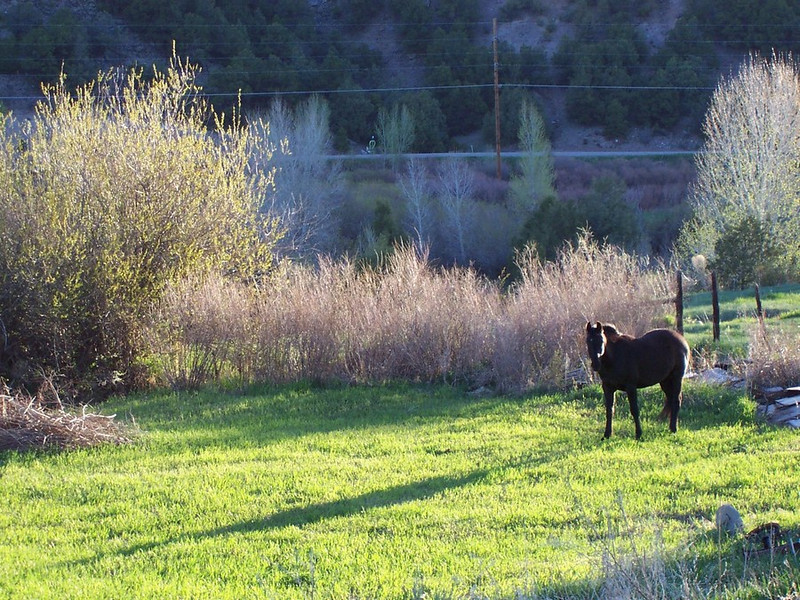 Sometimes the neighbor's horses find their way onto our land. This guy sneaked onto our land early one morning and grazed on some seedling trees. I think the trees will survive though.