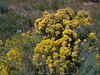 Yellow and purple wildflowers bloom all over the Vadito property in September.