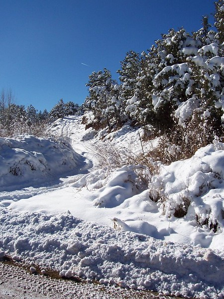 Snow on Forest Service land across the road in front of the Vadito land (December 2007).