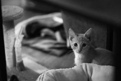 Kittens of Davis