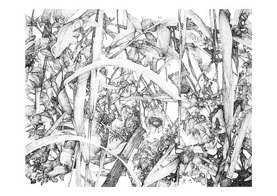 Untitled / ink on paper (unframed) / 59.4cm x 84.1cm / original £450 / image 5228
